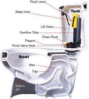 Anatomy of a toilet bowl